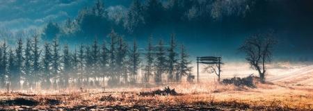 Foto de Luz del sol en el bosque verde temprano en la mañana. - Imagen libre de derechos