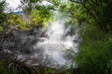 Photo pour Sources thermales volcaniques de Rotorua en forêt, Nouvelle-Zélande - image libre de droit