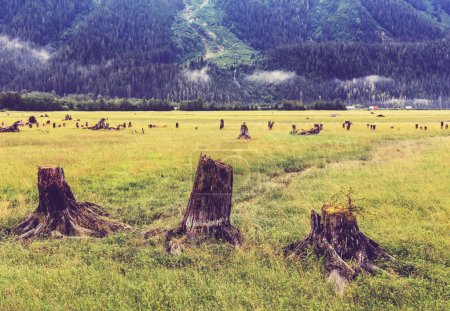 Scenic landscapes of Alaska