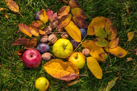 Autumn fruits and walnuts