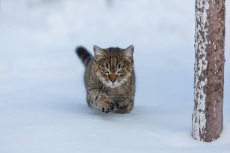 beautiful cat in snow