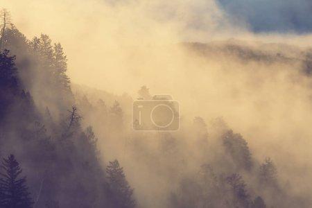 misty Fog in mountains