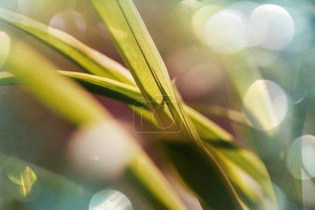 Green grass shot