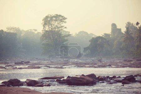 Serenity River in jungle