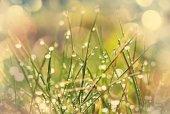 Wet grass close up