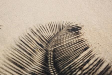 Palm shadow on the sandy beach