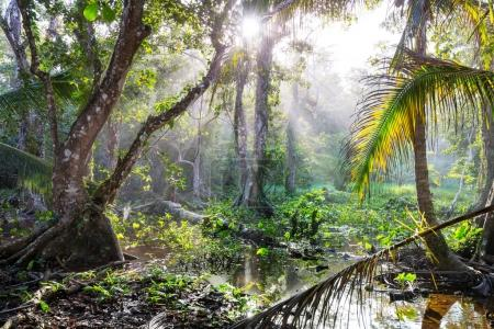 Jungle in Hawaii nature recreation