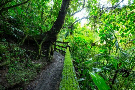 Jungle in Hawaii nature recreation