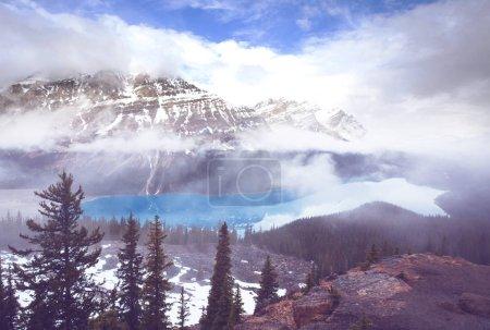 Photo pour Lac Peyto dans le parc national Banff, Canada - image libre de droit