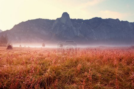 Photo for Sunny autumn meadow nature landscape - Royalty Free Image