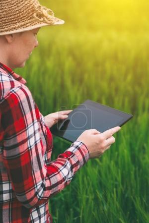Photo pour Agricultrice utilisant un ordinateur tablette dans le champ de blé, concept d'agriculture intelligente moderne en utilisant l'électronique - image libre de droit