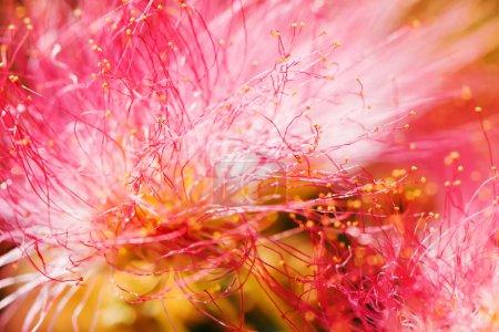Photo pour Macro fleur rose vue comme fond naturel abstrait - image libre de droit