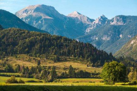 Photo pour Superbe paysage des Alpes juliennes en été. Détail de la région autour du lac Bohinj en Slovénie . - image libre de droit