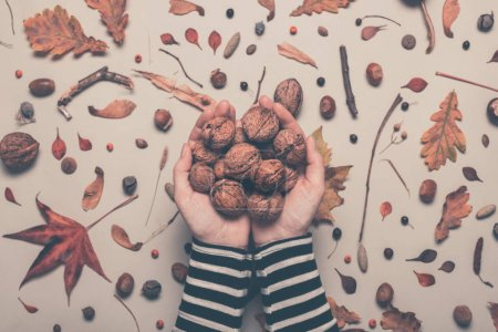 Photo for Handful of whole walnut fruit from above, female hands holding nuts over autumn season decorated table, retro toned image with selective focus - Royalty Free Image