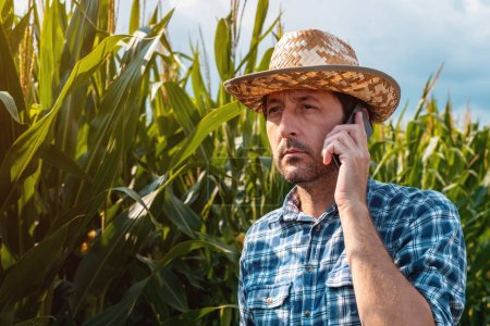 Photo for Corn farmer talking on mobile phone on crop plantation. Portrait of handsome male farm worker with plaid shirt and straw hat using smartphone for communication in cultivated agricultural field - Royalty Free Image