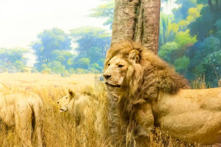 Family of lions in savanna