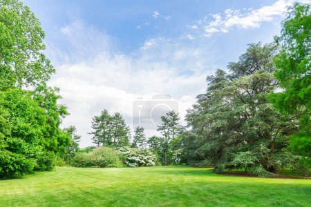 Photo pour Paysage de prairies fraîches avec herbe verte et arbres. Ciel bleu et nuages en arrière-plan - image libre de droit