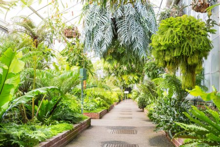Photo for Alley with beautiful trees and plants in garden greenhouse - Royalty Free Image