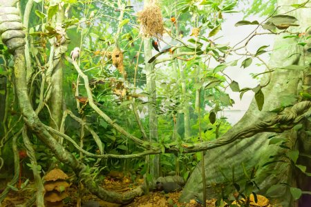 mini model of natural forest