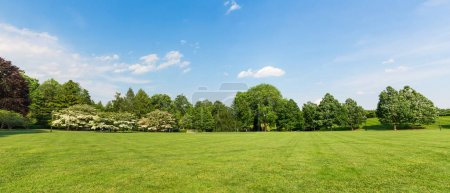 Photo for Fresh meadow landscape with green grass and trees. Blue sky and clouds on background - Royalty Free Image