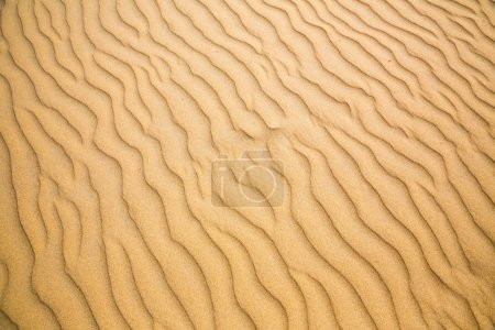 sandy waves of beach