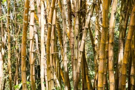 brown bamboo trunks