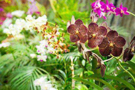 Photo pour Belles fleurs peradeniya, Sri Lanka flore tropicale vue rapprochée . - image libre de droit