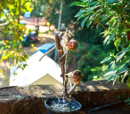 cute little monkeys on Sri Lanka