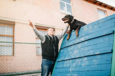 male cynologist training working dog on playground