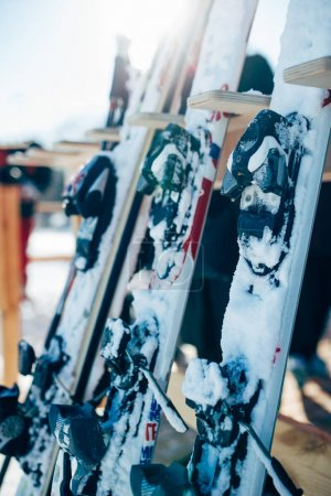 Photo for Row of snowboards closeup. Winter extreme sport concept. Snowboarding equipment - Royalty Free Image