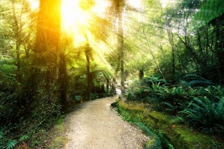 Photo pour Chemin de terre dans une belle forêt verte avec rayon de soleil - image libre de droit
