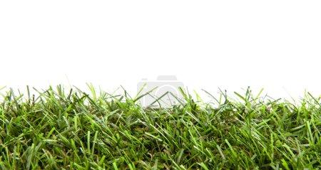 Photo pour Herbe verte en gros plan sur fond blanc - image libre de droit