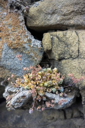 Succulents growing out from sandstone