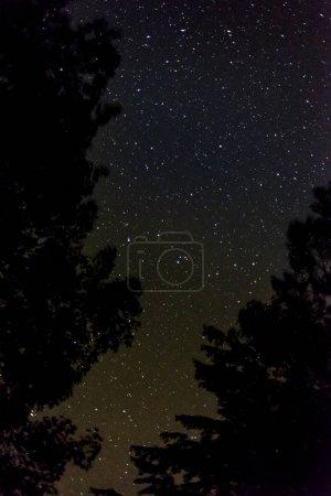 Photo pour Silhouettes de branches d'arbres sur les étoiles de nuit ciel fond - image libre de droit