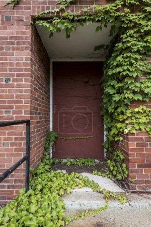 Entrée de la porte de briques abandonnés avec ivy