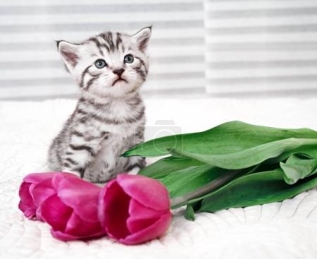Cute kitten and flowers.