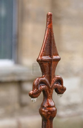 Photo for Royal lily with rain drops against building - Royalty Free Image