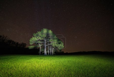 Photo for View on pine tree against starry night sky - Royalty Free Image
