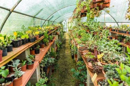 Succulents and cactus blooming flowers in hothouse...