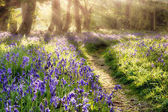Spring bluebell path through a magical forest