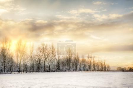 Photo for Cold and snow covered landscape on a winters morning with sunrise setting the sky on fire. Bare trees line the horizon and snow fields - Royalty Free Image