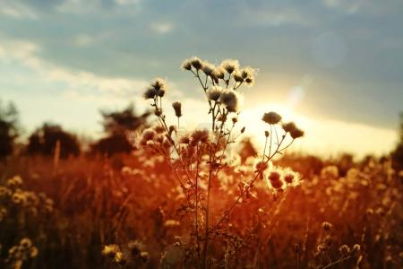 sunset over field of wild