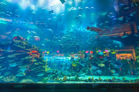 Huge Oceanarium inside Dubai Mall