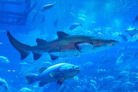 Huge Oceanarium inside Dubai Mall