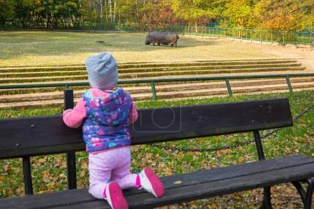 Little toddler girl looking at the hippo
