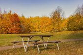Park bench in autumn setting