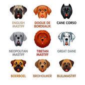 Cute dog icons set III