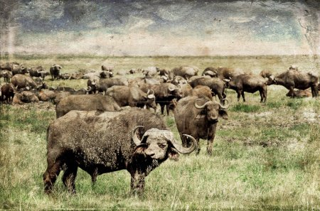 Photo for Wildebeests in the Serengeti National Park, Tanzania - Royalty Free Image