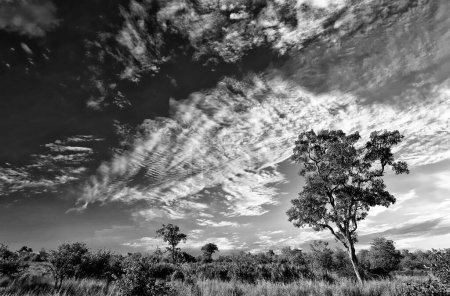 Photo for African landscape with dramatic clouds in Kruger National Park, South Africa - Royalty Free Image