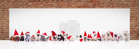 Many animals wearing santa claus hats and costumes...